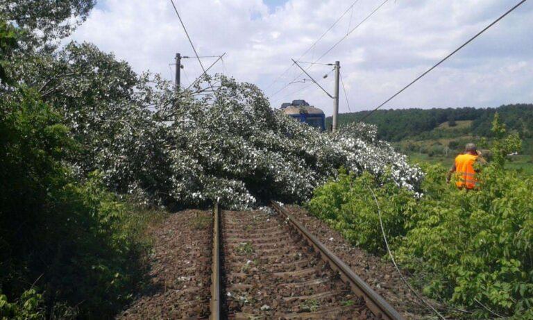 Căderile de copaci au paralizat circulația feroviară pe anumite porțiuni dn vestul țării